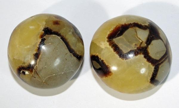 Septarian Palmstone (Round)